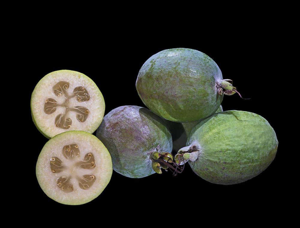 Acca_sellowiana_Fruit_MHNT_Fronton